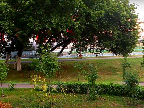 Каким быть парку на Химмаше?