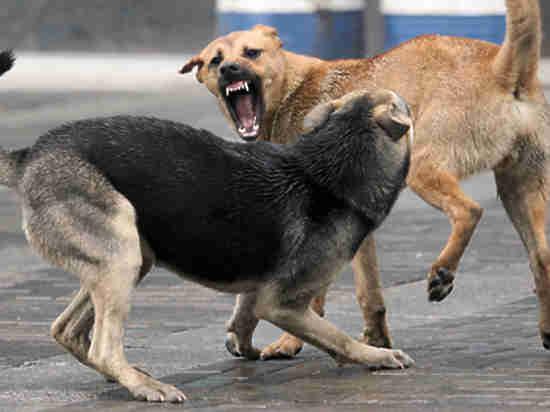 Бездомные собаки в Теньгушевском районе угрожают безопасности жителей